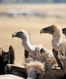 abutres-vultures-argentina-default-imf-wb